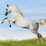 Лошадей на переправе не меняют, а вот… можно и нужно