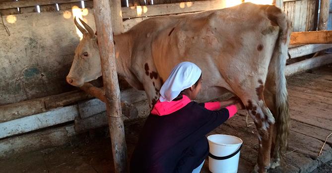 Производство молока и мяса вырастет: на освобожденных территориях будут развивать животноводство