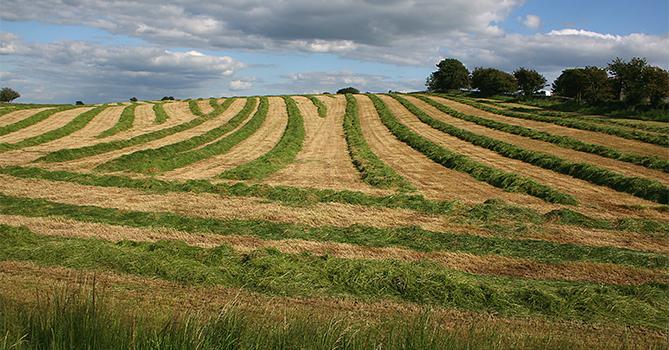 Производство в сельском хозяйстве растет, но импорт не сдает позиции