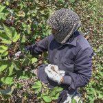 Обратная сторона хлопкового рая: черный труд ради «белого золота»