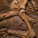 В Канаде 12-летний мальчик нашел скелет жившего 69 млн лет назад динозавра