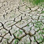 Если жара не спадет, то сельское хозяйство, конечно, пострадает