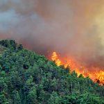 В Азербайджане локализован лесной пожар