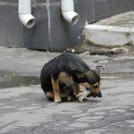 """""""В собак стреляли полицейские"""", - утверждают зоозащитники"""