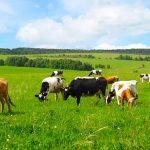 В Азербайджане разрабатывается Госпрограмма по развитию животноводства