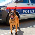 В Вене полицейским собакам выдали ботиночки