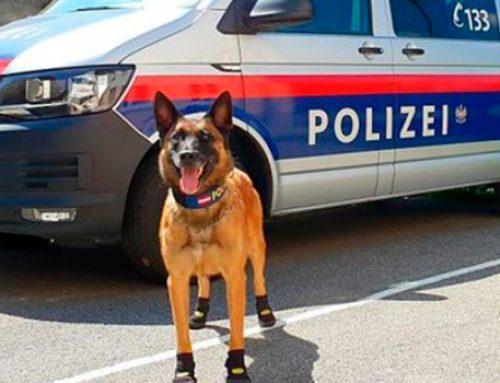 Список потенциально опасных пород собак: нужен ли он в Азербайджане?