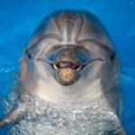 Во Франции закрыли пляж из-за трехметрового дельфина