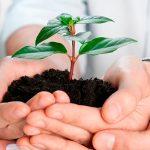 Устраняя риски – правительство утвердило новые правила агрострахования