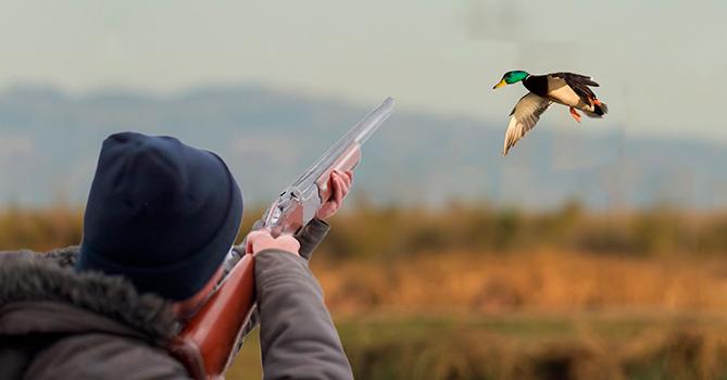 Минэкологии Азербайджана: Большая часть общества одобряет запрет охоты
