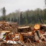 Лесная мафия продолжает уничтожать леса