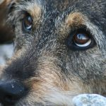 В Хачмазе «очищают» территорию района от собак