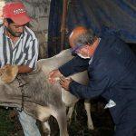 В Азербайджане около 2,5 млн голов крупного рогатого скота прошли вакцинацию