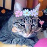 Snapchat становится Cat-chat: готовьтесь к кошачьему вторжению