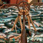 В Азербайджане обнародованы виды запрещенной для ловли рыбы