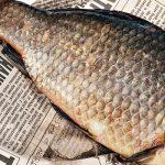 Похмелье или осетрину ловить запрешено, но кушать можно