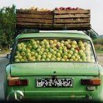 Почем яблоки или почему местные фермеры терпят убытки ?
