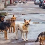 В Азербайджане ведется расследование в отношении лиц, убивающих бездомных животных