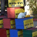 В Турции старые избирательные урны превратили в дома для кошек