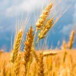 Как журналисты сельское хозяйство поднимали