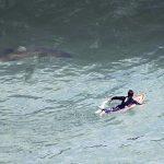 Акула напала на серфера у северо-восточного побережья Австралии