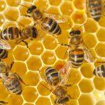 Особенности развития отечественного пчеловодства: хочешь субсидии? Плати