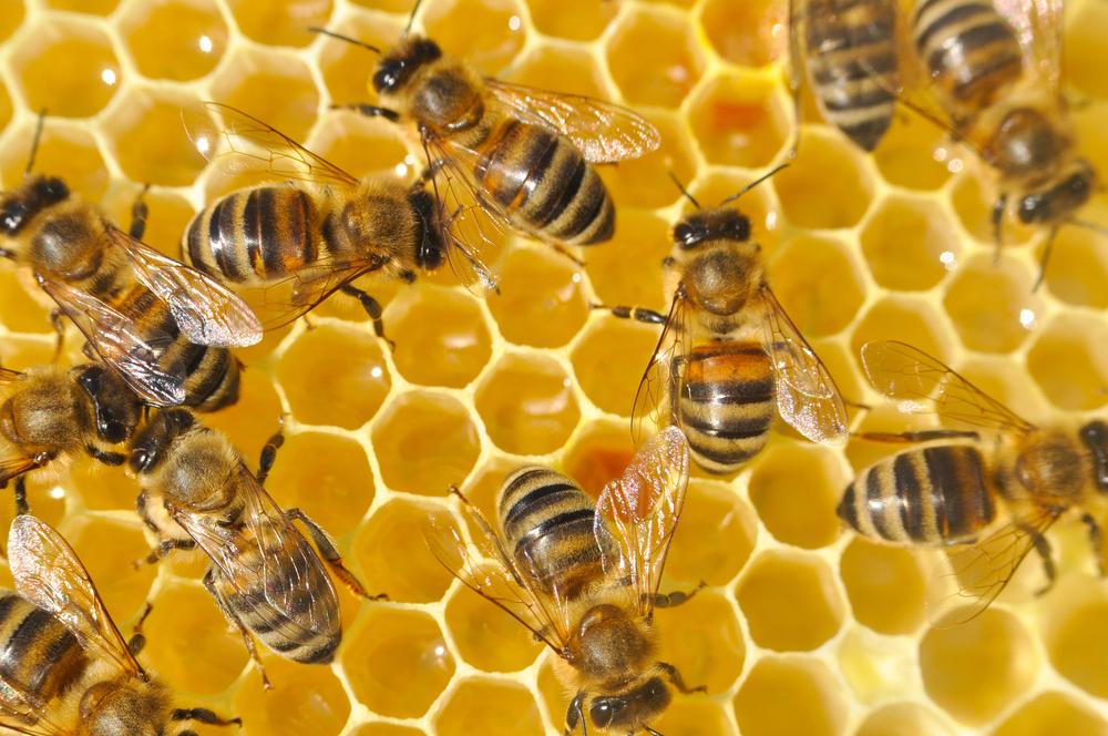 Дорога ложка к обеду: пчеловоды сейчас нуждаются в госсубсидиях