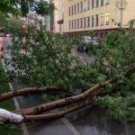 Сильный ветер повалил в Баку около 40 деревьев