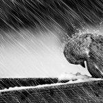 Синоптики сулят сильный ветер и снег