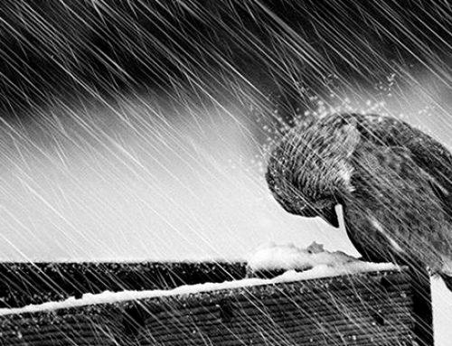 Происки закулисы: как изобличаликоварный ветер