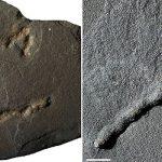 Ученые узнали, как выглядели первые животные