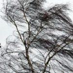 Госслужба инспекции труда Азербайджана обратилась к работодателям в связи с сильным ветром
