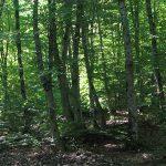 Вырубка лесов осталась в далеком прошлом?