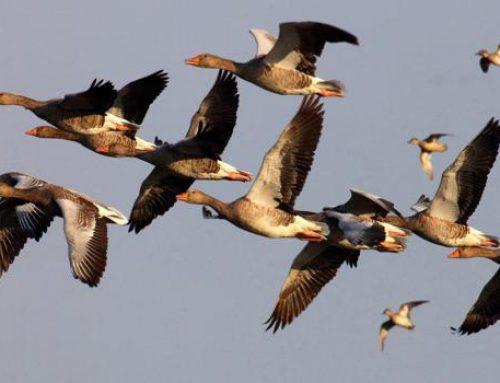 В Азербайджане состоится очередной мониторинг в связи с «птичьим гриппом»
