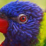 Индийские фермеры пожаловались на налеты попугаев-наркоманов