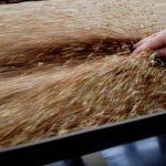 В Азербайджане налоговые льготы для сферы производства муки и хлеба будут продлены