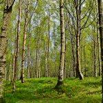 В Азербайджане будут созданы леса промышленного назначения