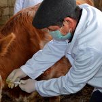 Массовая вакцинация животных продолжается