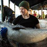 Сотни мертвых дельфинов были выброшены на берега Франции