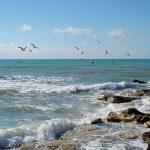 Не ловится рыбка - ни большая, ни маленькая: что мешает развитию рыбоводства в Азербайджане?
