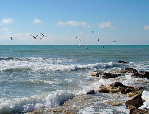 Неподалеку от бакинского поселка, в море обнаружено тело женщины — ФОТО