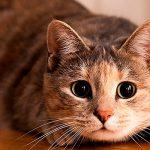 Кошки в США могут спать спокойно