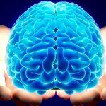 Ученым удалось частично оживить мозг свиньи