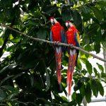 Бразильская полиция арестовала попугая-наркодилера