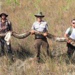 Американцы нашли в заповеднике гигантского питона