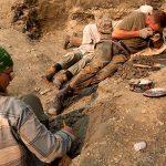 Останки черепах, которые жили 130 миллионов лет назад нашли в Якутии