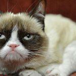 """Умерла """"сердитая кошка"""" Grumpy cat"""