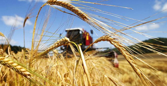 Поможет ли стандарт качества пшеницы в условиях растущей цены на импорт?