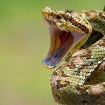 9 человек из-за укусов змей обратились в Клинический медцентр