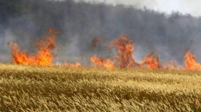 В Венесуэле не менее 12 человек погибли из-за пожара на плантации